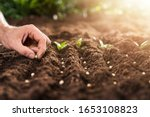 farmer's hand planting seeds in ... | Shutterstock . vector #1653108823