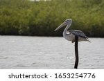 A Pelican Resting On A Branch   ...
