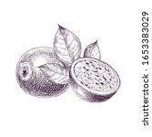 hand drawn passion fruit. set... | Shutterstock .eps vector #1653383029