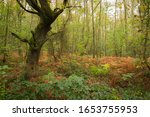 Autumnal Woodland Scene With...