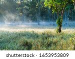 Natural Grass Background With...