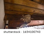 Swallow Nests In The Corner Of...