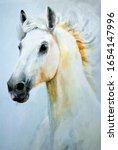 White Arabian Horse. Stallion....