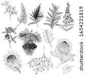 flowers  leaves  berries... | Shutterstock .eps vector #1654231819