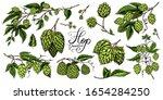 hops and barley. malt beer.... | Shutterstock .eps vector #1654284250