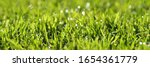 Small photo of Beautiful green lawn with nice water drops with perfect sunlight. The dominating color is a fresh and warm green the embodiment of a perfect lawn in a garden the wish of every gardener.
