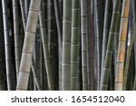 Bamboo Forest Background  Moso...
