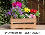 Colored Potted Plants