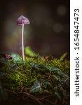 Macro Mushrooms In The Moss