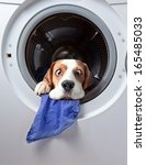 Stock photo very delicate washing 165485033