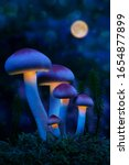 Fantastic World Of Mushrooms....