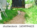 Calico Barn Cat Shows Kitten...