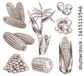 sketch corn. hand drawn vintage ... | Shutterstock .eps vector #1655113546