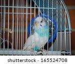 Parakeet Posing For In A Metal...