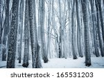 Frozen Trees In A Cold Forest...