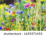 Plant A Native Habitat For...