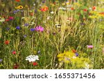 Butterfly Meadow With...