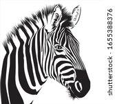 Zebra Animal Illustration ...