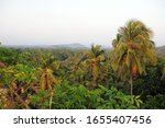 View Of Palm Groves And...