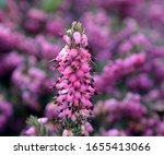 Beautiful Pink Green Flower...