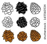 set with pine cones isolated on ... | Shutterstock .eps vector #165560534