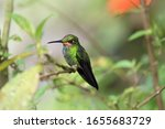Colorful Tiny Hummingbird On A...