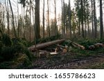 Cut down tree logs Spring forest pruning sunny afternoon in Switzerland 2020