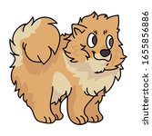 cute cartoon pomeranian puppy...   Shutterstock .eps vector #1655856886