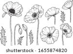 Hand Darwn Vector Poppy Flower. ...