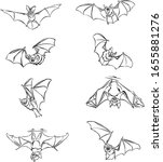 bat  bat ibat  bat in flight ...   Shutterstock .eps vector #1655881276