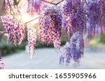 Spring Flowers Wisteria...