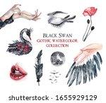 Black Swan Watercolor...