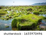 Rocks And Moss On The Seabed At ...