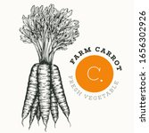 Hand Drawn Sketch Style Carrot. ...