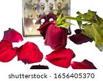 Small photo of listless rose and petals on a white background