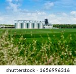 Agricultural Green Wheat Field...