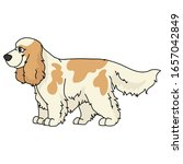 cute cartoon cocker spaniel dog ...   Shutterstock .eps vector #1657042849