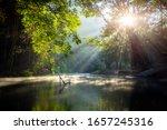 Beautiful  Steam Green Forest...