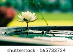 A Beautiful White Waterlily Or...
