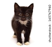 Stock photo little kitten isolated on white background 165767960