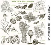 autumn,basil,cardamom,chives,collection,cumin,dill,doodle,drawn,eco,fennel,food,ginger,grunge,hand
