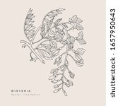 hand draw vector wisteria... | Shutterstock .eps vector #1657950643