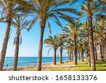 Palm Grove Along  A Beach In...