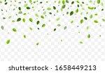 forest leaf vector template.... | Shutterstock .eps vector #1658449213