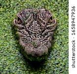 A Close Up Shot Of A Crocodile...
