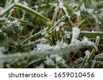 Macro On Grass With Frost And...