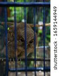 angry caged owl in blue caged - stock photo