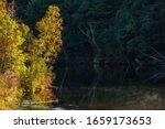 Leafy trees in bright morning sunlight on one side of a lake still in shadow on the other side in a county park in southern Wisconsin, USA, early morning in autumn, with digital oil-painting effect