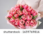 Crimson Color Tulips In Woman...