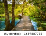 Wooden Boardwalk In The Green...